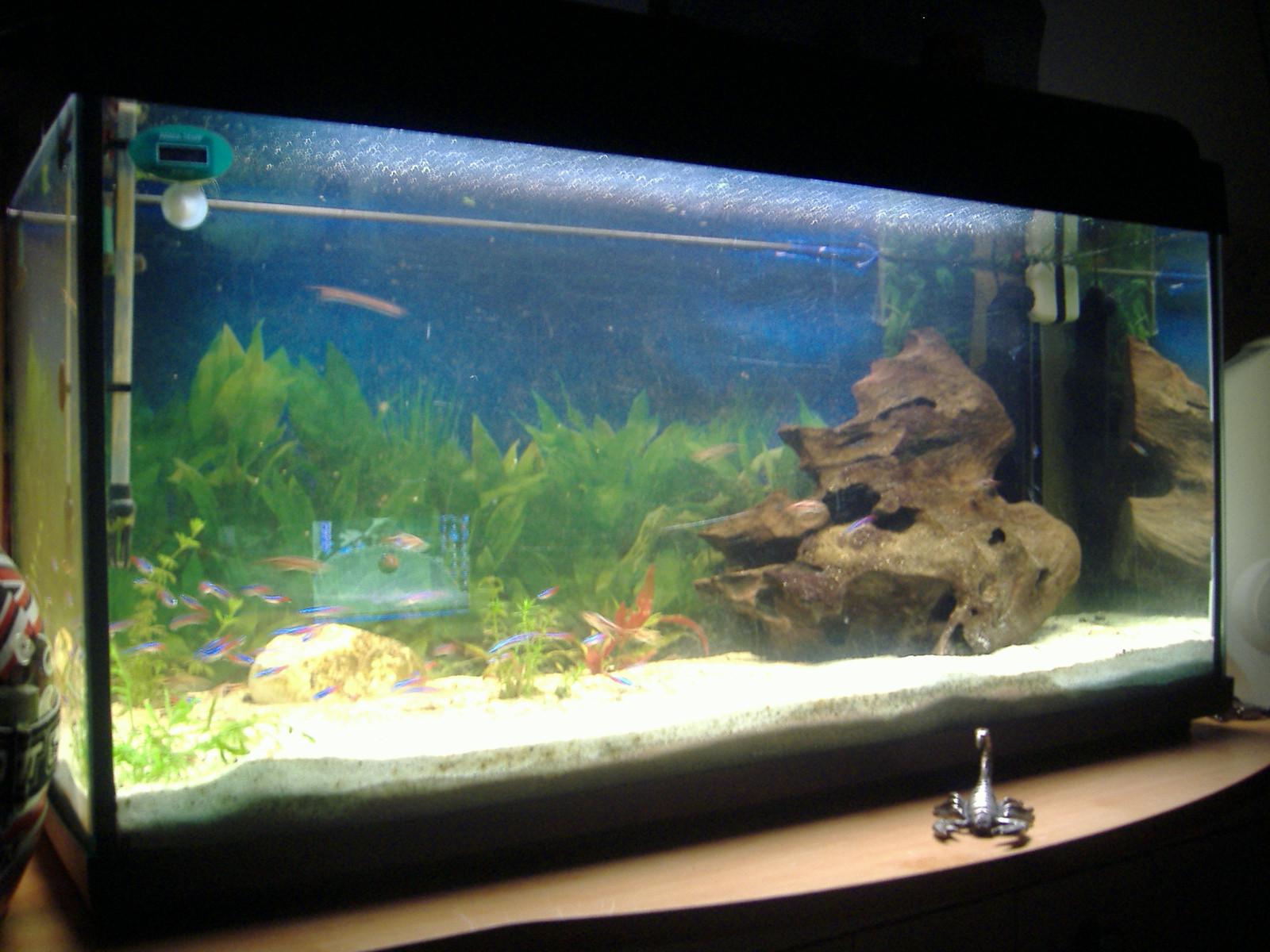 Mon aquarium aquarium de neon for Neon aquarium